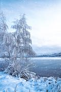 Stock Photo of Winter landscape with trees, covered with hoarfrost and lake