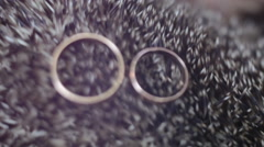 Wedding RING needle hedgehog - closeup Stock Footage