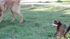 Dog plays with a cat Stock Footage