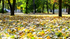 Yellow foliage blown by breeze in autumn with green trees - stock footage