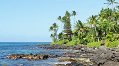 Beautiful panorama of the ocean coast with palm trees Stock Footage