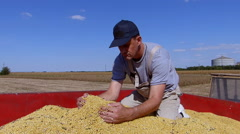 Stock Video Footage of Satisfied middle age farmer enjoys at soybean income during harvesting.