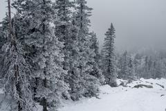 Snow-covered forest on the slopes of the mountain. Stock Photos