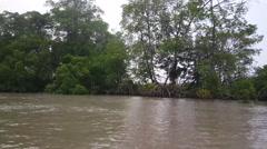 Suriname 81Misty Commewijne river Stock Footage