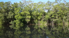 Commewijne river in Suriname with mangrove Stock Footage