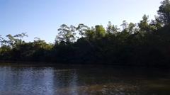 Commewijne river in Suriname Stock Footage