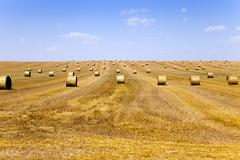 agriculture   field .  summer - stock photo