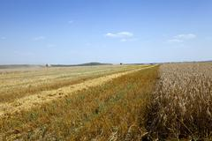 agriculture. harvest. summer - stock photo