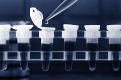 PCR strip test tubes and micropipette in genetics laboratory. Toned photo Stock Photos