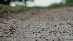 cracks in the ground macro forest background close up - stock footage