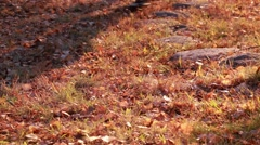Metal detecting in autumn Stock Footage