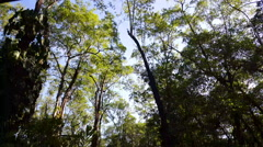 Tracking shot through the forest Stock Footage