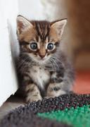 fanny kitten - stock photo