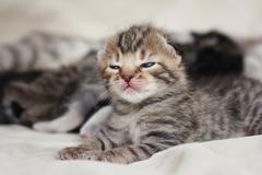 2 week sleeping baby kitten portrait - stock photo