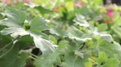 Common decor plants Stock Footage