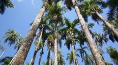 Palm Gardens (Palmentuin) Stock Footage