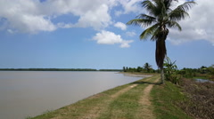 Dyke at the Suriname River Stock Footage