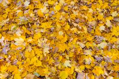 Leaves on the floor Stock Photos