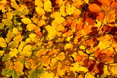 Colorful autumn background - stock photo