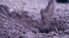 Gardener arranges land and puts plant Stock Footage