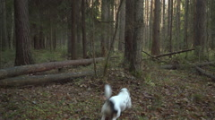 Dog playing with stick in the forest Stock Footage