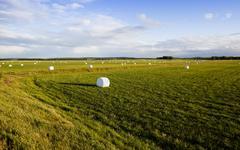 Harvesting grass   in cellophane Stock Photos
