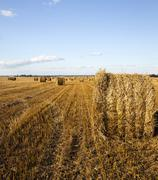 agriculture .  harvest. summer - stock photo