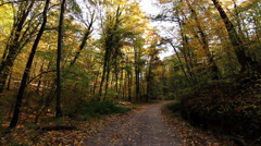 Magical autumn forest road in autumn forest Stock Footage