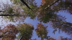 Forest Fall Europe 12 - stock footage