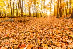 Fallen leaves and fall foliage - stock photo
