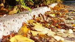 Many red soldier bug in yellow autumn leaves Stock Footage