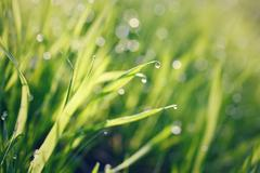 Green grass with dew drops Stock Photos