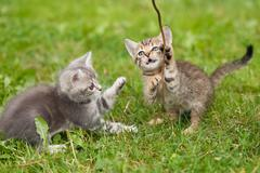 Playful kittens Stock Photos
