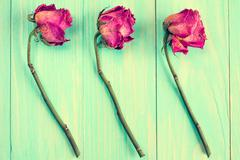 Old roses on blue wooden background - stock photo