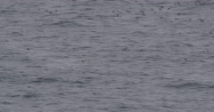 Slow Motion -  Kittiwake Flying Over Arctic Ocean Stock Footage