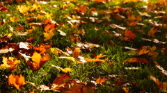 Stock Video Footage of Leaves in the grass, autumnal landscape