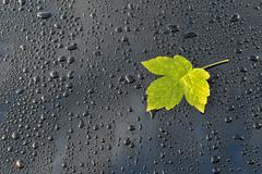 Water Drops on Polished black Car paint with Leaf Stock Photos