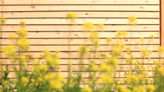 Wood Siding and Yellow Flowers Stock Footage