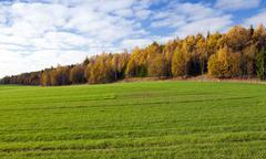 the autumn season. - stock photo