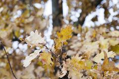 Stock Photo of trees in the autumn season