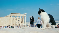 Stock Video Footage of Closeup of a wild cat near the Parthenon, Athens