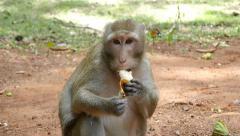 4k monkeys wildlife free animals outdoors eating primate ape - stock footage