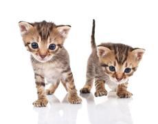 Stock Photo of Tabby kittens