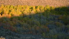 Time Lapse of Morning Sun Shining on Colored Leaves Fall Foliage -Zoom Out- - stock footage