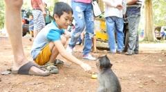 4k monkeys little boy feeding wild baby primate monkey - stock footage