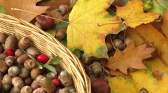 Autumn background - chestnuts, acorns Stock Footage