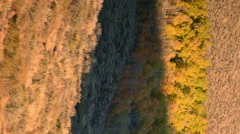 Time Lapse of Morning Sun Shining on Colored Leaves Fall Foliage -Vertical Pan- - stock footage