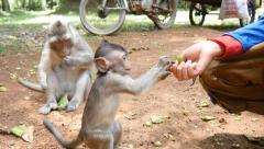 4k monkeys wildlife boy feeding baby primate - stock footage