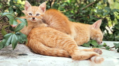 Two red kittens sleeping Stock Footage