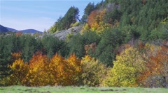 Forest with colorful autumn trees and green pine trees and blue sky Stock Footage
